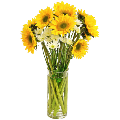 Solar Sunflower  Cocktail